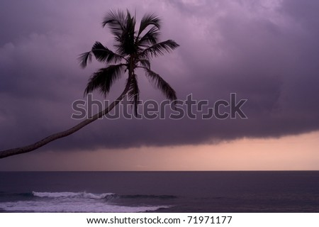 Palm in front of rainy clouds at sunset. Sri Lanka