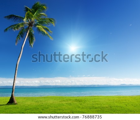 palm in grass and Caribbean sea
