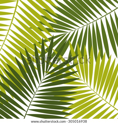 Palm Leaf  Background  Illustration