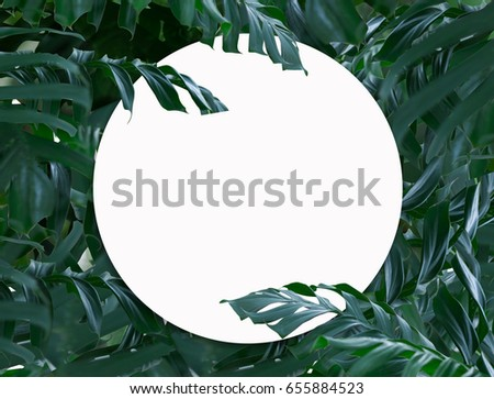 Palm leaf background layout and blank circle space for text. #655884523
