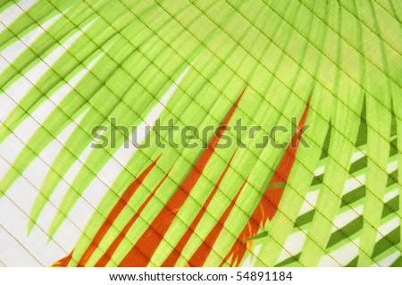 Palm leaf background texture design - stock photo