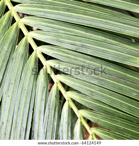 Palm leaf close-up, may be used as background