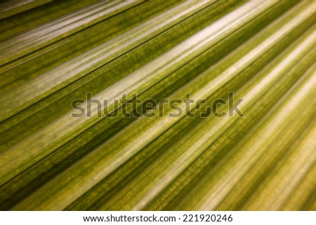 palm leaf close up tropical abstract background
