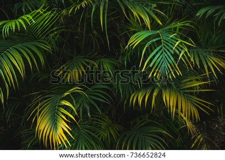 Palm leaf in dark forest background  #736652824