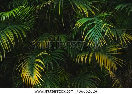 Palm leaf in dark forest background  #736652824