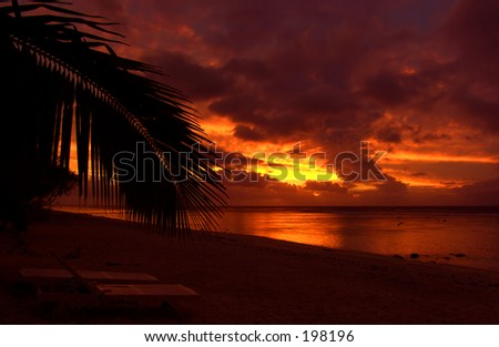 Palm Leaf in front of Sunset in the Cook Islands