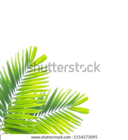 Palm leaf isolated on white background #1154273095
