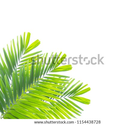 Palm leaf isolated on white background #1154438728