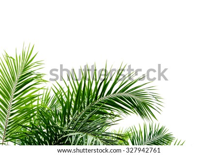 Palm leaf isolated on white background #327942761