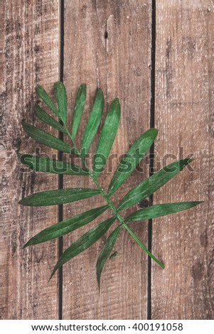 palm leaf on a wooden background #400191058