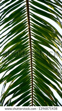 palm leaf on abstract background Photo
