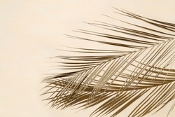 Palm leaf on beige pastel background