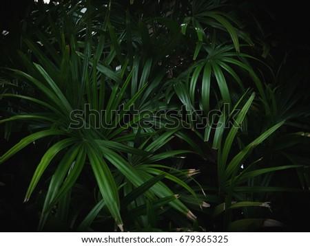 Palm leaf pattern on black background #679365325