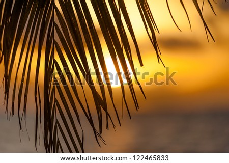 Palm leaf silhouette and the sun shining through at sunset