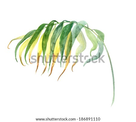 Banana Leaf Watercolor Palm Leaf Watercolor