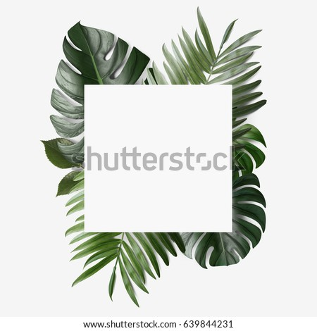 Palm leafs background concept #639844231