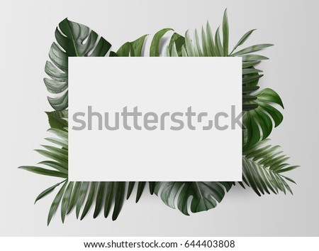Palm leafs background concept #644403808