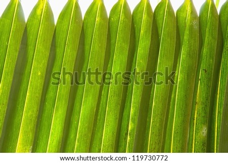 Palm leave green line