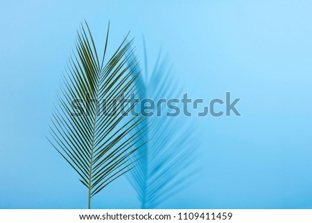 Palm leave on pastel blue background. Minimal concept. Flat lay.