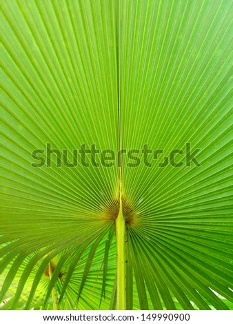 palm leave pattern line background