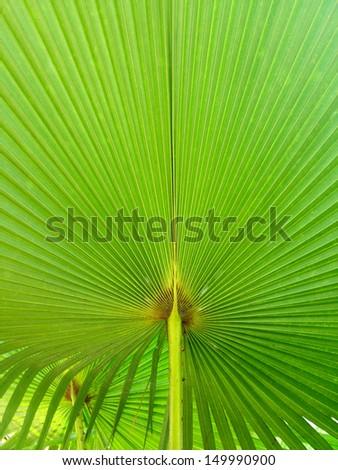 palm leave pattern line background