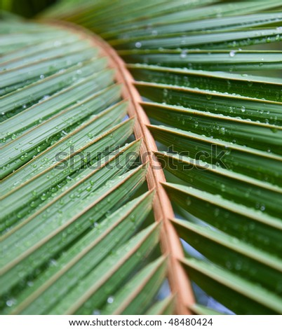 Palm leaves after rain