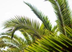 Palm leaves against the sky. Subtropics