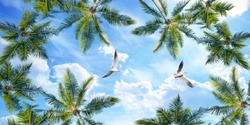 palm leaves and flying seagulls in cloudy sky