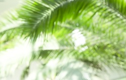 Palm leaves blurred background
