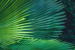 Palm leaves dark green background