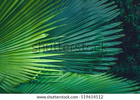 Palm leaves dark green background