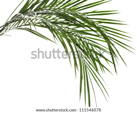 Palm leaves isolated on white #115546078