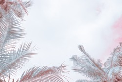 palm leaves on a light background, light tint with blur, frame for text, background cover