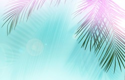 Palm leaves on blue background in sunlight