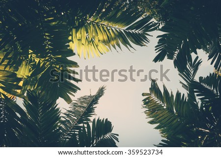 Palm leaves on sky background vintage color #359523734