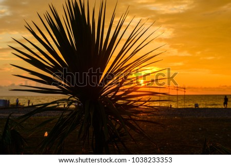 Tropical beach with palm leaf silhouette on sunset Images