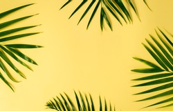 Palm leaves on yellow background. Summer concept. Flat lay, top view, copy space
