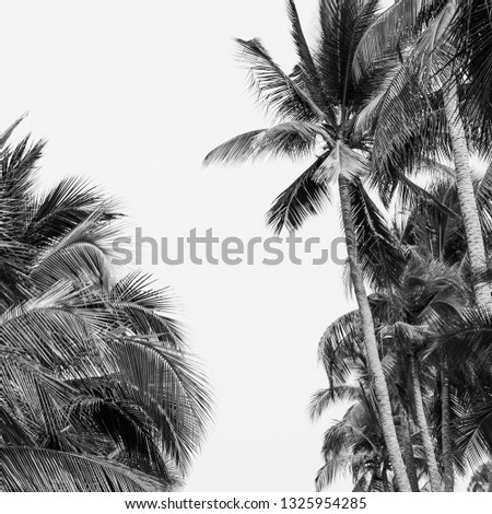 Palm leaves silhouette black white background #1325954285