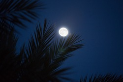 palm leaves silhouettes with full moon on background
