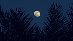 palm leaves silhouettes with full moon on background, Tropical night. Full moon and palm leaf abstract background. Copy space of nature environment and travel adventure concept. Vintage tone filter