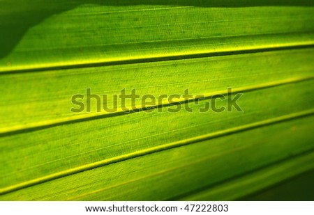 Palm leaves sub-texture