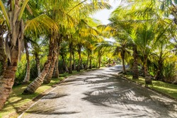 Palm lined road in Las Terrenas, Dominican Republic