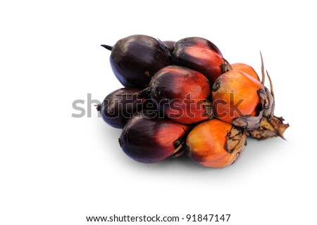 Palm Oil fruits isolated against white background, selective focus.