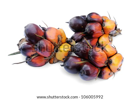 Palm Oil fruits isolated on white background, selective focus.