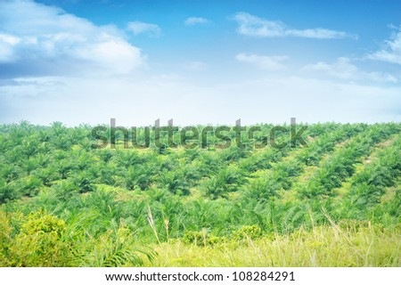 Palm Oil Plantation in Johor, Malaysia.