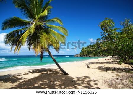 Palm on caribbean beach, Punta Cana