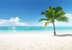 Palm on the beach, Dominican Republic