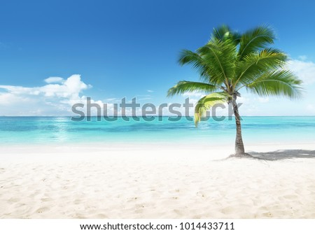 Palm on the beach, Dominican Republic #1014433711