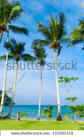 Palm Panorama Green Getaway - stock photo