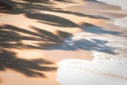 Palm shadow on the sand at the tropical sandy beach of Caribbean sea coast